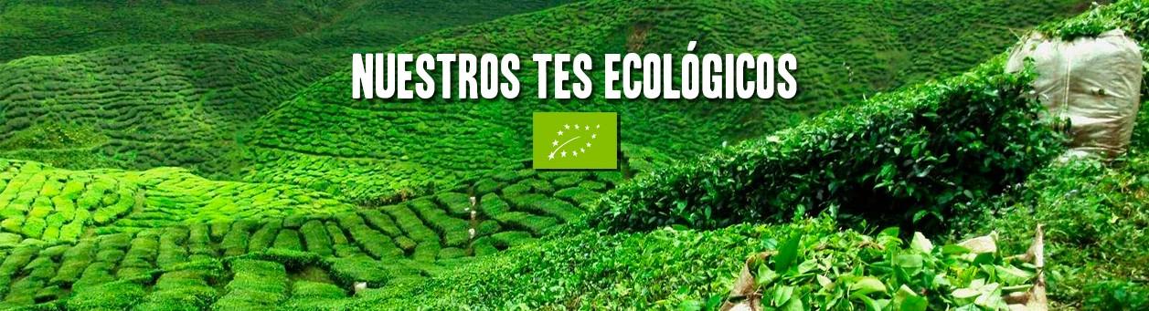Tes Ecolígicos